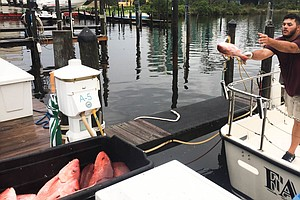 Who Gets To Fish For Red Snapper In The Gulf? It's All Politics