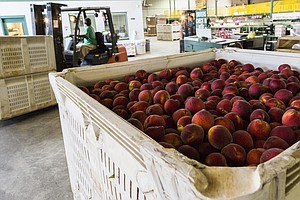 Unseasonable Winter Weather Takes A Bite Out Of Georgia's Peach Crop