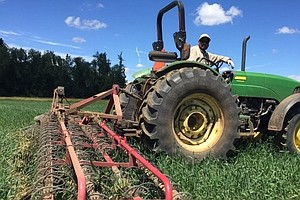 Zapping Noxious Weeds On Organic Farms Is Harder Than You...