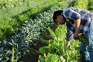 Nonprofit Helps California's Asian-American Farmers Grow ...