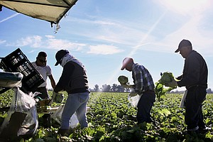 Farm-To-Table May Feel Virtuous, But It's Food Labor That...