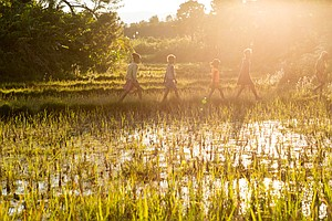Erratic Weather Threatens Livelihood Of Rice Farmers In M...