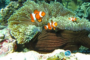Coral Reef Fish Are More Resilient Than We Thought, Study...