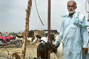 Why Some Muslims In Pakistan Won't Be Able To Buy A Goat ...