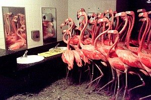 Flamingos In The Men's Room: How Zoos And Aquariums Handl...