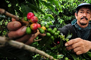 Coffee, Bees and Climate Change Are Linked In Ways You May Not Have Expected