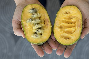 This Once-Obscure Fruit Is On Its Way To Becoming PawPaw-...