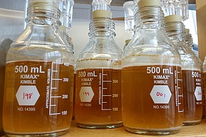 The Taming Of The Brew: How Sour Beer Is Driving A Microbial Gold Rush