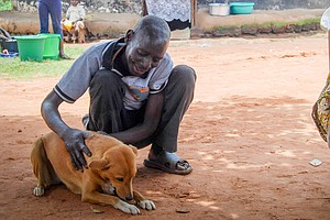 How Dogs Are Lending A Paw To Uganda's Traumatized War Ve...