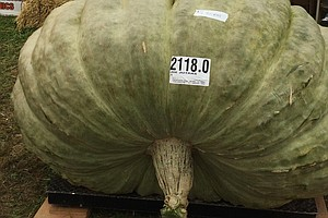 Green Squash Deemed World's Biggest Brings Triple Win To ...