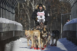 Investigators Say No Sign Of Cruelty In Kennel Of Former Iditarod Champ