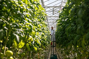 Hydroponic Veggies Are Taking Over Organic, And A Move To...