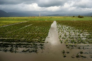 Puerto Rico's Hurricane Recovery Hinders Farm Businesses'...