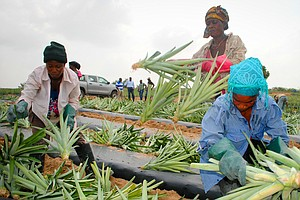 Why An Ivy League MBA Went Back To Ghana To Help A Pineapple Farm