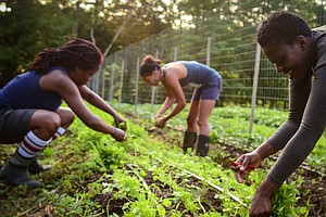 Black Farmers Are Sowing The Seeds Of Health And Empowerment