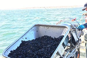 Shellfish Industry, Scientists Wrestle With Potentially D...