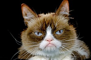 Grumpy Cat Awarded $710,000 In Copyright Infringement Suit