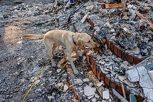 Forensic Search Dogs Sniff Out Human Ashes In Wildfire Wr...