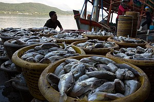 Was Your Seafood Caught With Slave Labor? New Database He...