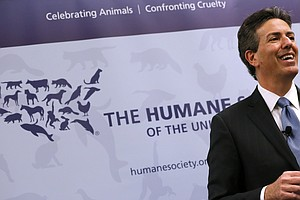 CEO Of The Humane Society Resigns Amid Allegations of Sex...