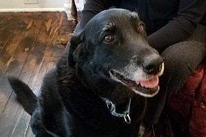 10 Years After She Went Missing, A Black Lab Is Returned ...