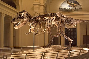 Sue The T. Rex Is Making Big Moves With Her Big Bones
