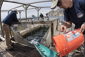 $40 Million Later, A Pioneering Plan To Boost Wild Fish S...