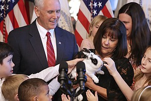 What's Up, Pence? Second Family's Rabbit Makes Children's Book Debut