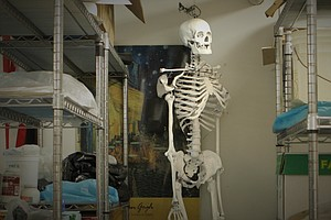 Classroom Skeleton: Whose Bones Are These?
