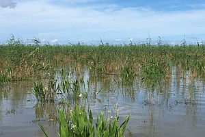 Louisiana Issues Quarantine To Control Invasive Marsh-Kil...