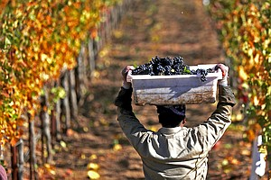 Should California Winemakers Be Worried About China's Tar...