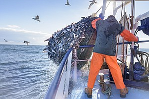 For 50 Years, Deep-Water Trawls Likely Caught More Fish T...