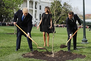 Macron's Gift Tree Gone From White House Lawn. Ambassador...