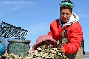 On East Coast Oyster Farms, 'Women Are Rising Up From The...