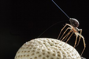 When Spiders Go Airborne, It's Electric — Literally
