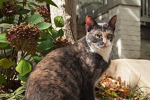 Washington, D.C., Is Counting All Its Cats. It Will Take 3 Years And $1.5 Mil...