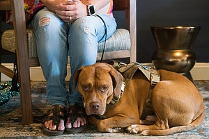 Service Dog Registries To Streamline Travel For Veterans ...