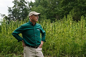 After Centuries, Hemp Makes A Comeback At George Washingt...