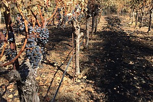 Baja Wine Region Faces High Taxes Low Water Supply Kpbs