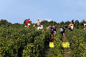 Champagne Makers Bubble Over A Bumper Crop Caused By Euro...