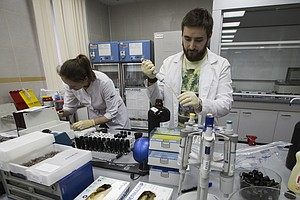Committee Recommends Russia's Anti-Doping Agency Be Reinstated