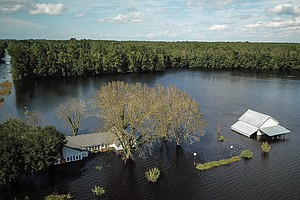 Florence Engulfs Hog Farms And Chicken Houses, Thrashing North Carolina Agric...