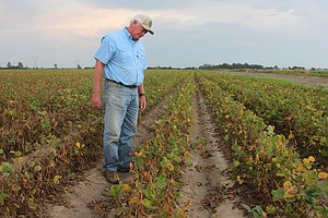 The EPA Says Farmers Can Keep Using Weedkiller Blamed For...