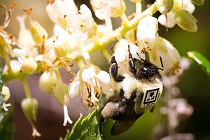Scientists Spy On Bees, See Harmful Effects Of Common Ins...