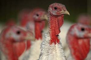 Gobble, Gobble? U.S. Turkey Production Growth Slowed In Last Decade