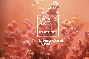 A Royal Hue: 'Living Coral' Crowned Color Of The Year For 2019