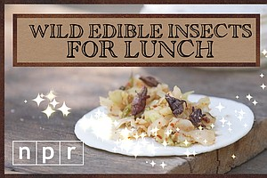 VIDEO: 4 Ways That Wild Edibles, Including Insects, Will ...
