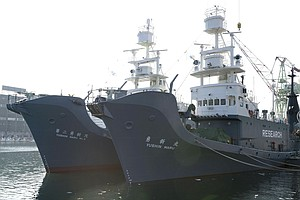 Japan Embraces Commercial Whaling, Pulls Out Of Global Al...