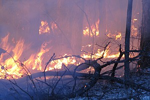 Shutdown Hampers Wildfire Preparedness and Training Acros...