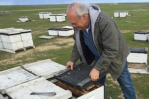 Massive Loss Of Thousands Of Hives Afflicts Orchard Growers And Beekeepers